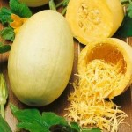 graines-courge-spaghetti-seeds